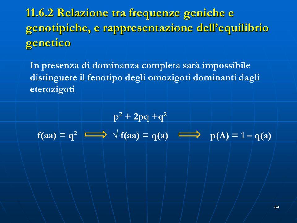 11.6.2 Relazione tra frequenze geniche e genotipiche, e rappresentazione dell'equilibrio genetico