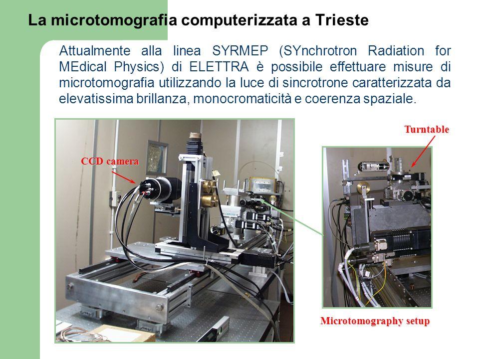 La microtomografia computerizzata a Trieste