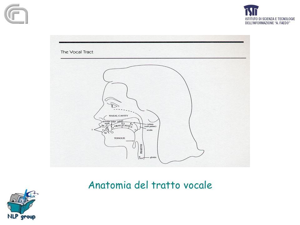 Anatomia del tratto vocale