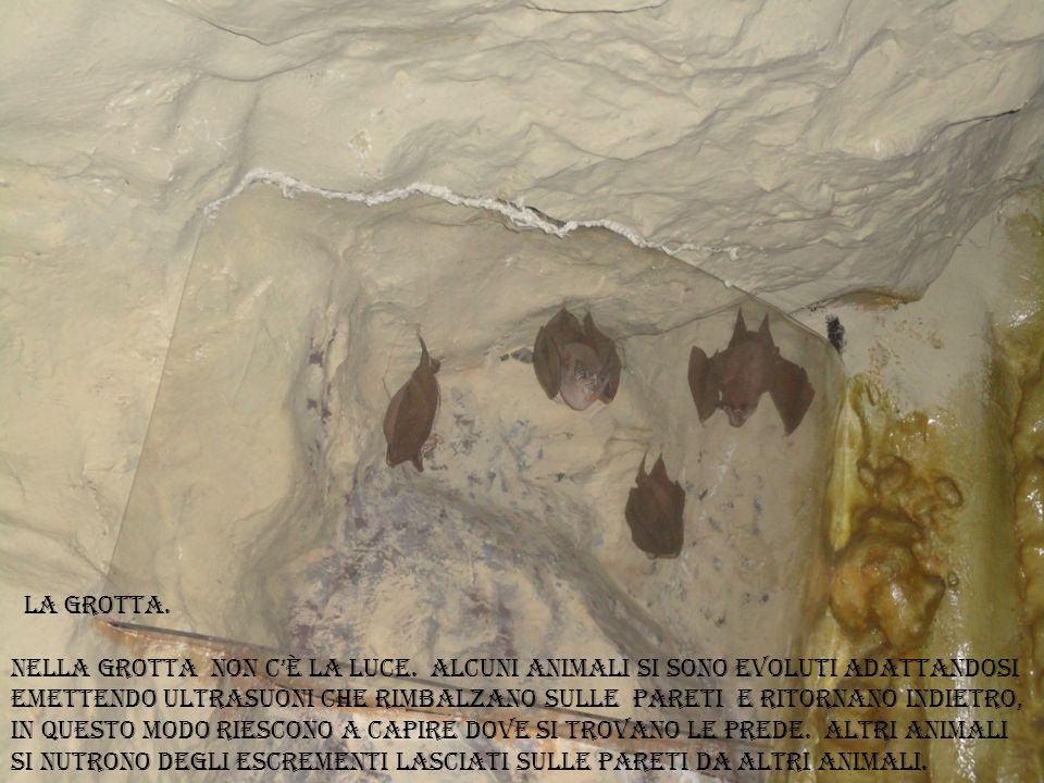 la grotta.