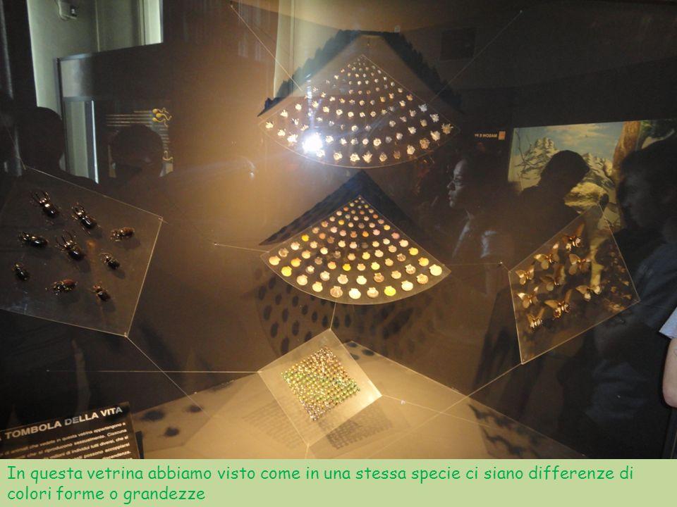In questa vetrina abbiamo visto come in una stessa specie ci siano differenze di colori forme o grandezze