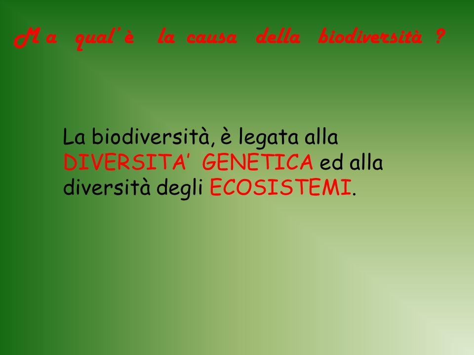 M a qual' è la causa della biodiversità