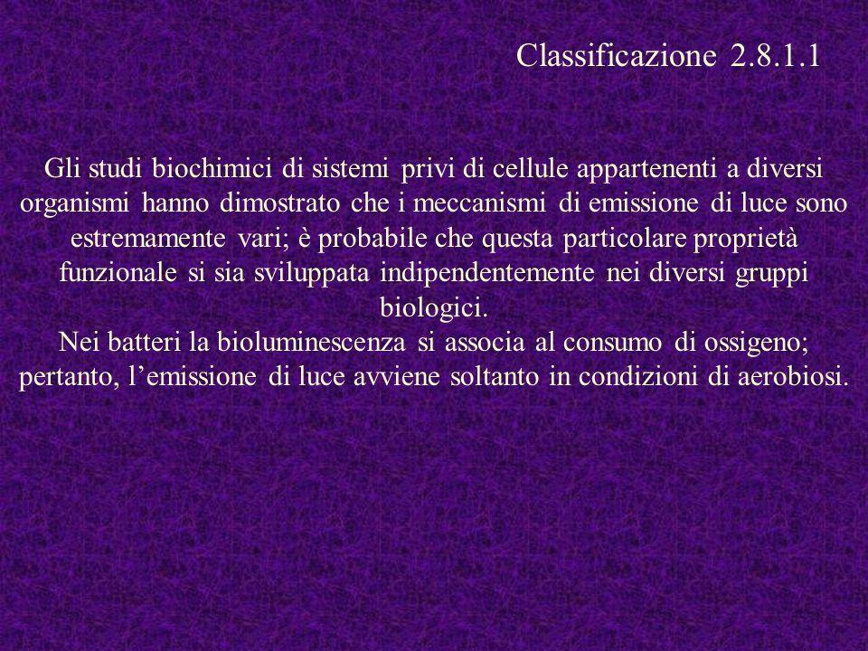 Classificazione 2.8.1.1