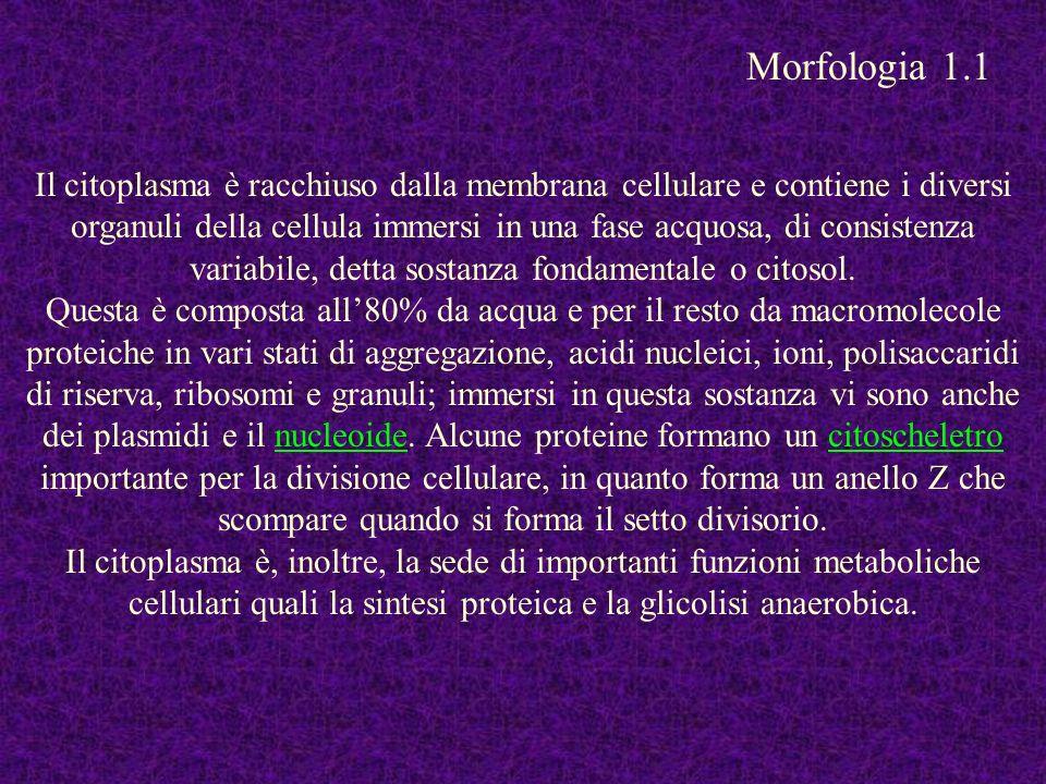 Morfologia 1.1