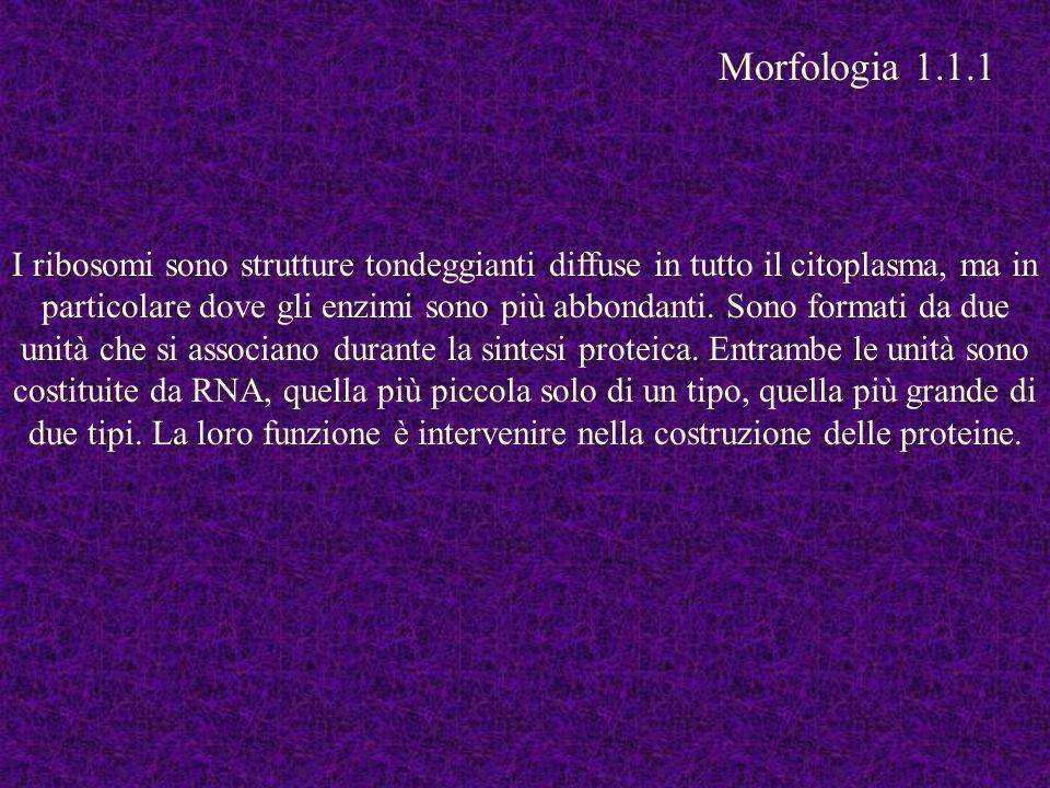 Morfologia 1.1.1