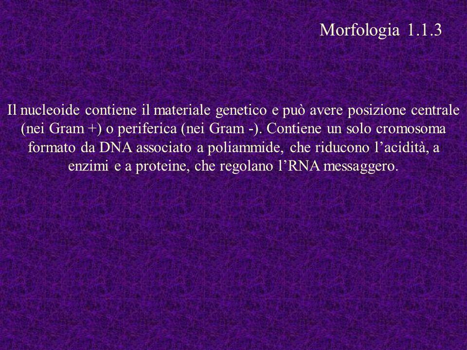 Morfologia 1.1.3