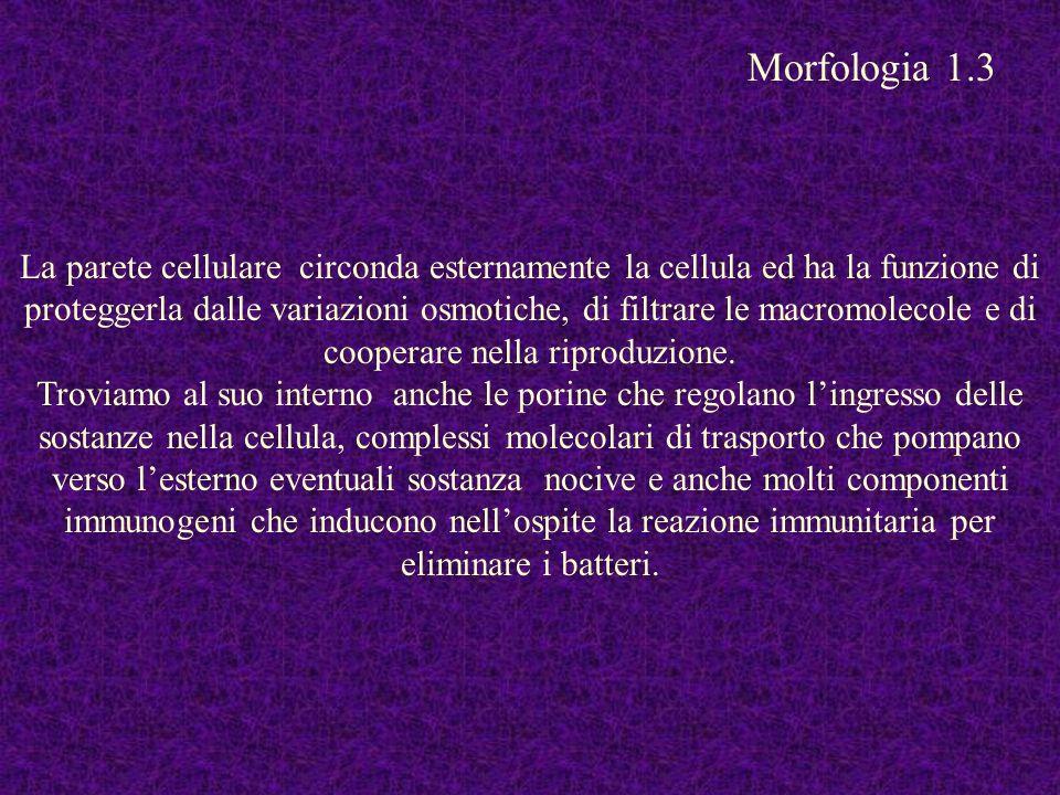 Morfologia 1.3