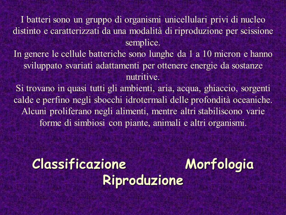 Classificazione Morfologia Riproduzione