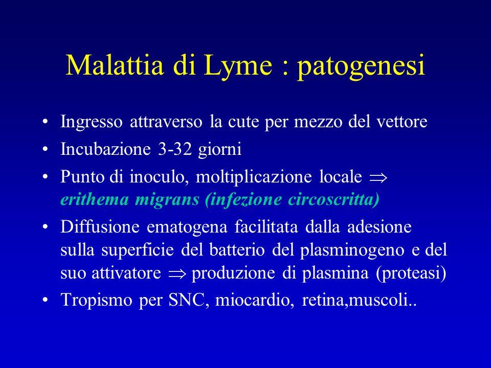Malattia di Lyme : patogenesi