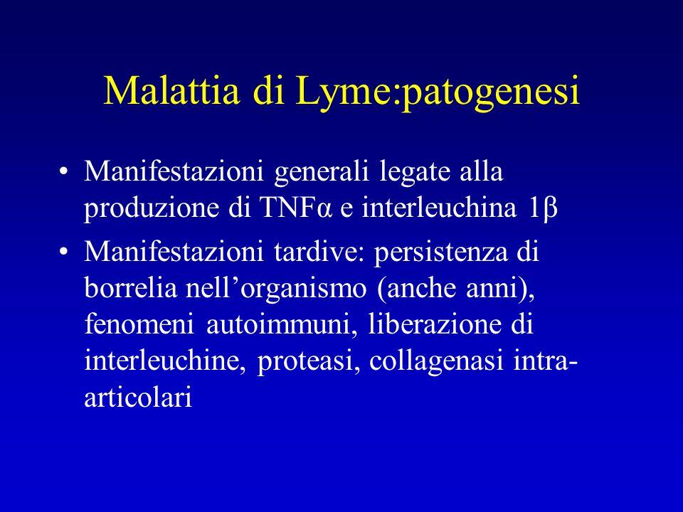 Malattia di Lyme:patogenesi