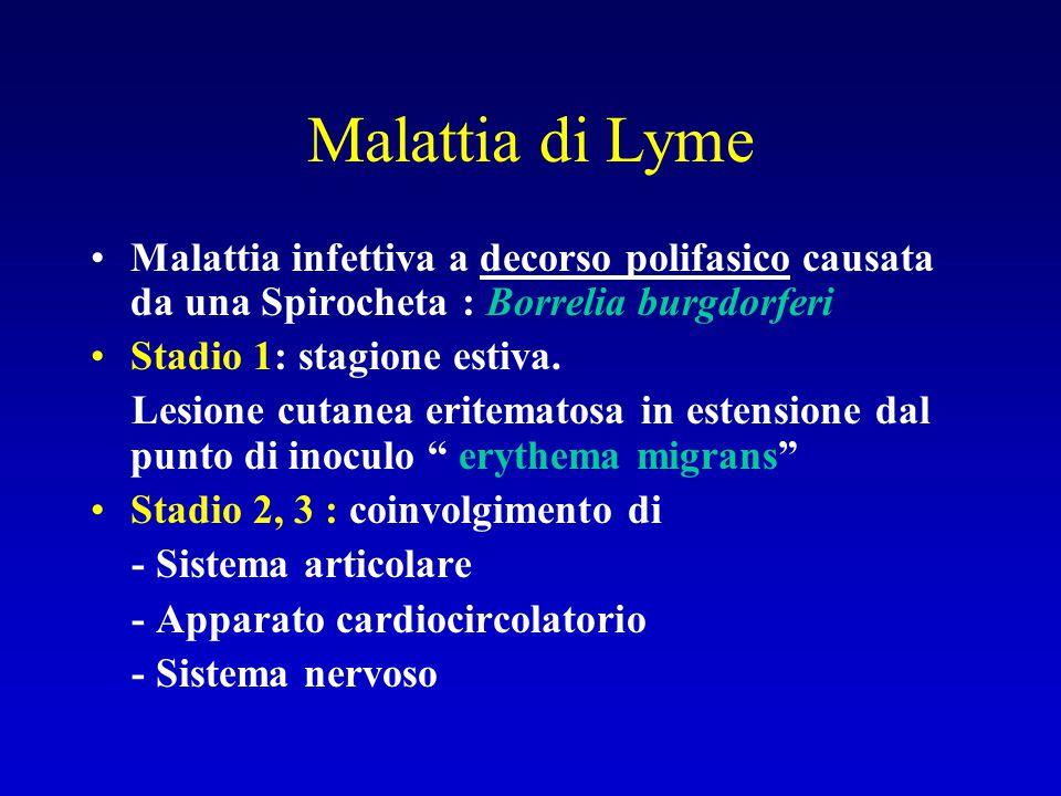 Malattia di Lyme Malattia infettiva a decorso polifasico causata da una Spirocheta : Borrelia burgdorferi.