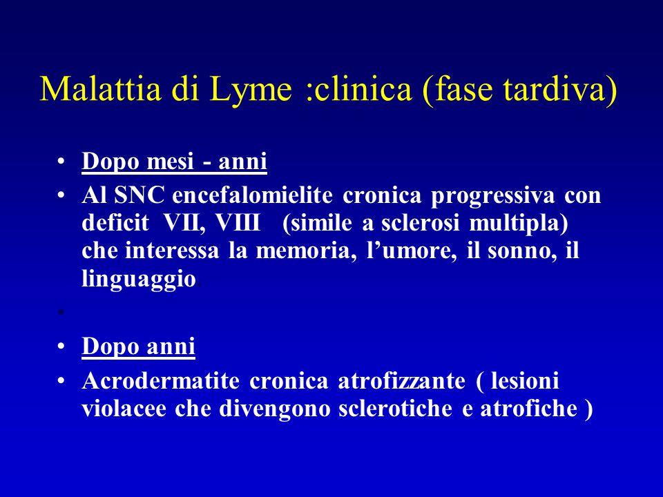Malattia di Lyme :clinica (fase tardiva)