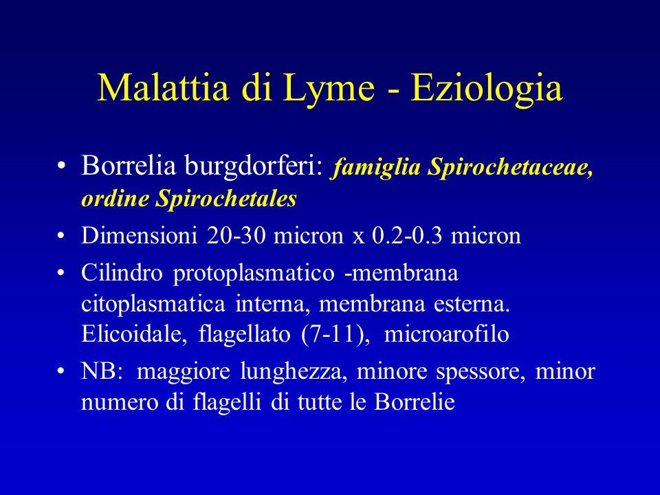 Malattia di Lyme - Eziologia