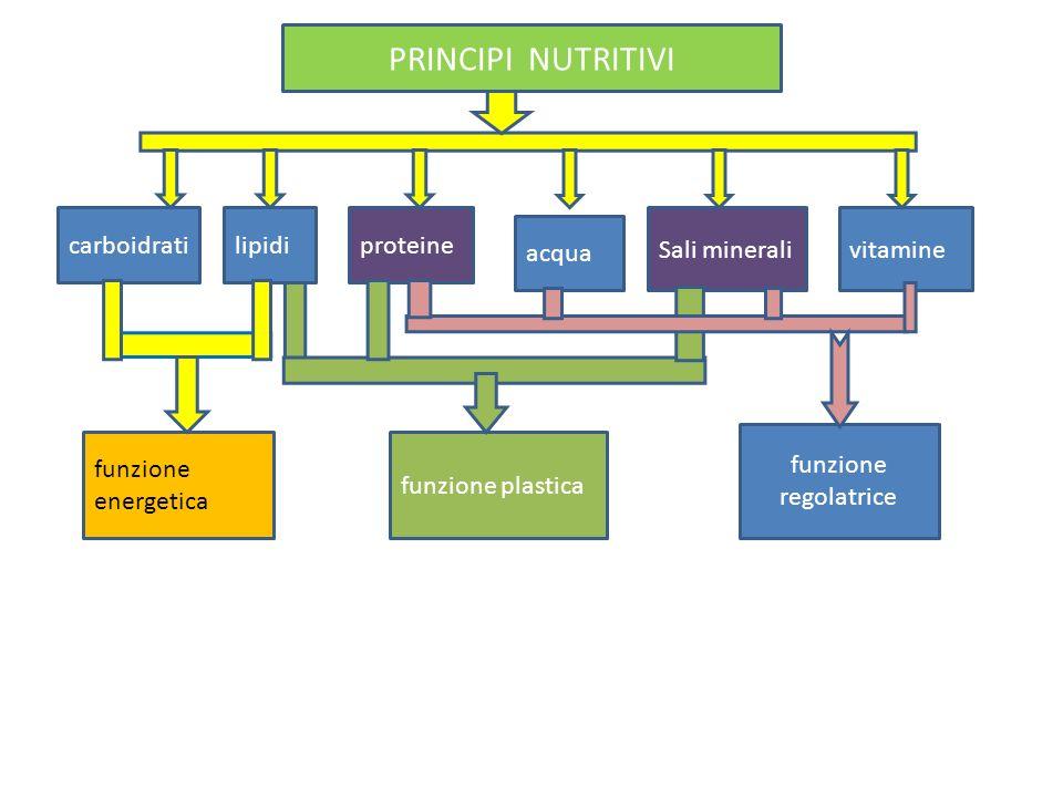 PRINCIPI NUTRITIVI carboidrati lipidi proteine Sali minerali vitamine