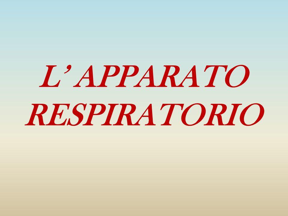 L' APPARATO RESPIRATORIO