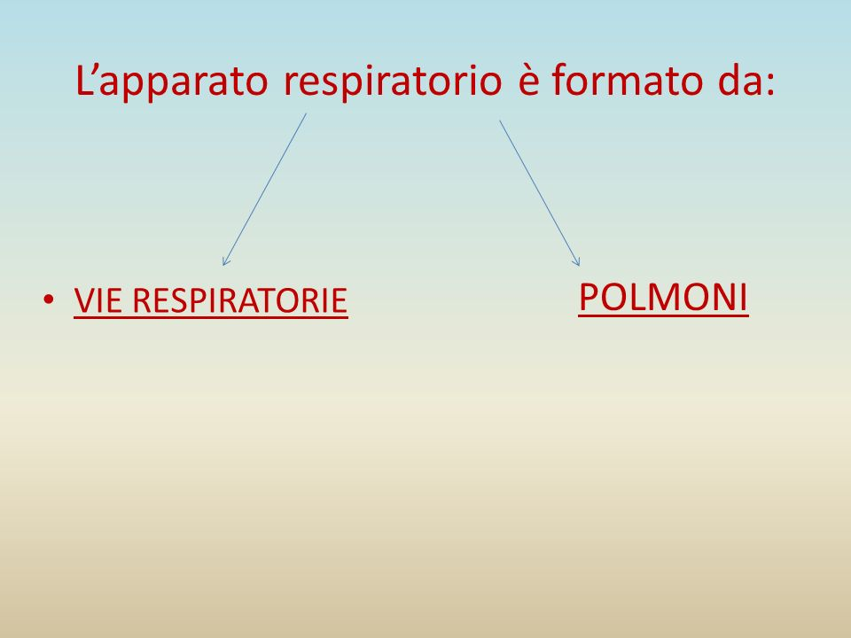 L'apparato respiratorio è formato da: