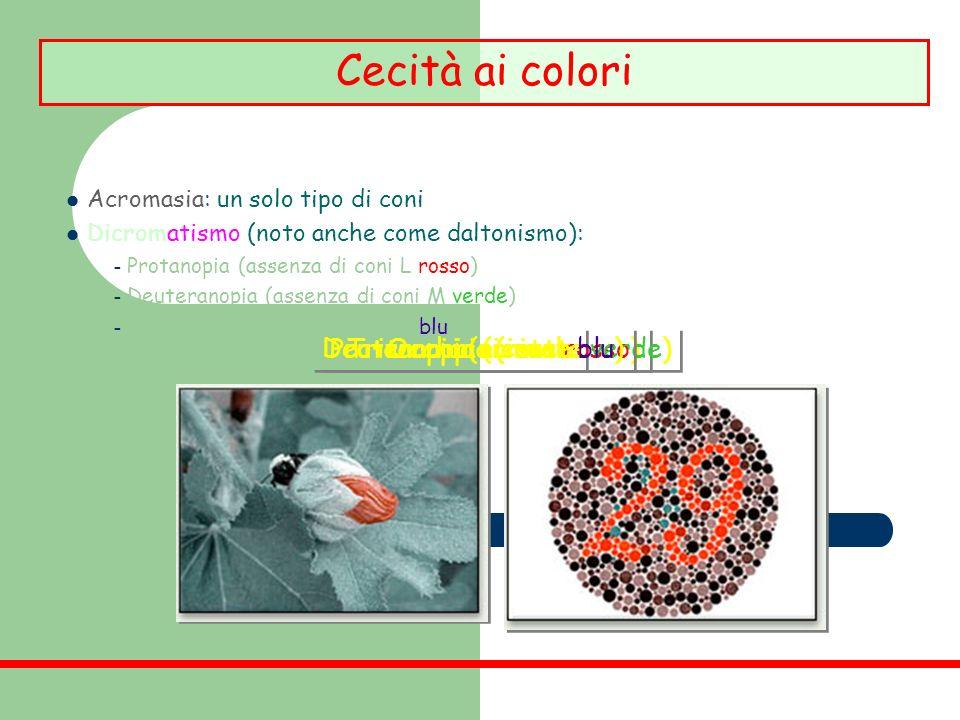 Cecità ai colori Tritanopia (niente blu) Deuteranopia (niente verde)