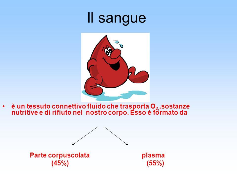 Il sangue è un tessuto connettivo fluido che trasporta O2,,sostanze nutritive e di rifiuto nel nostro corpo. Esso é formato da.
