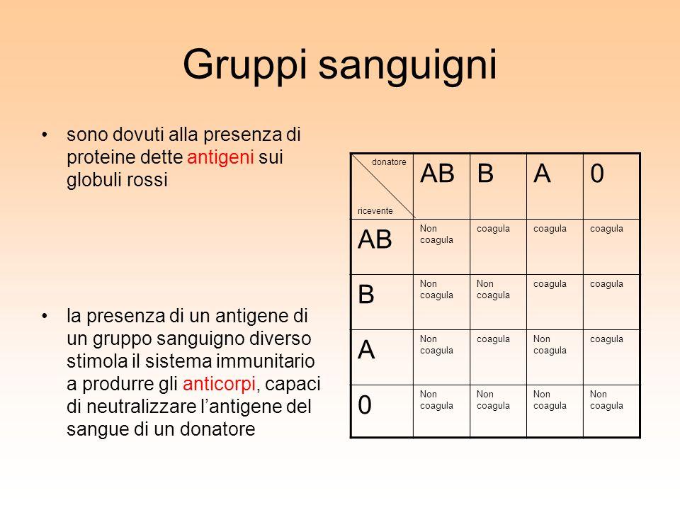 Gruppi sanguigni sono dovuti alla presenza di proteine dette antigeni sui globuli rossi.