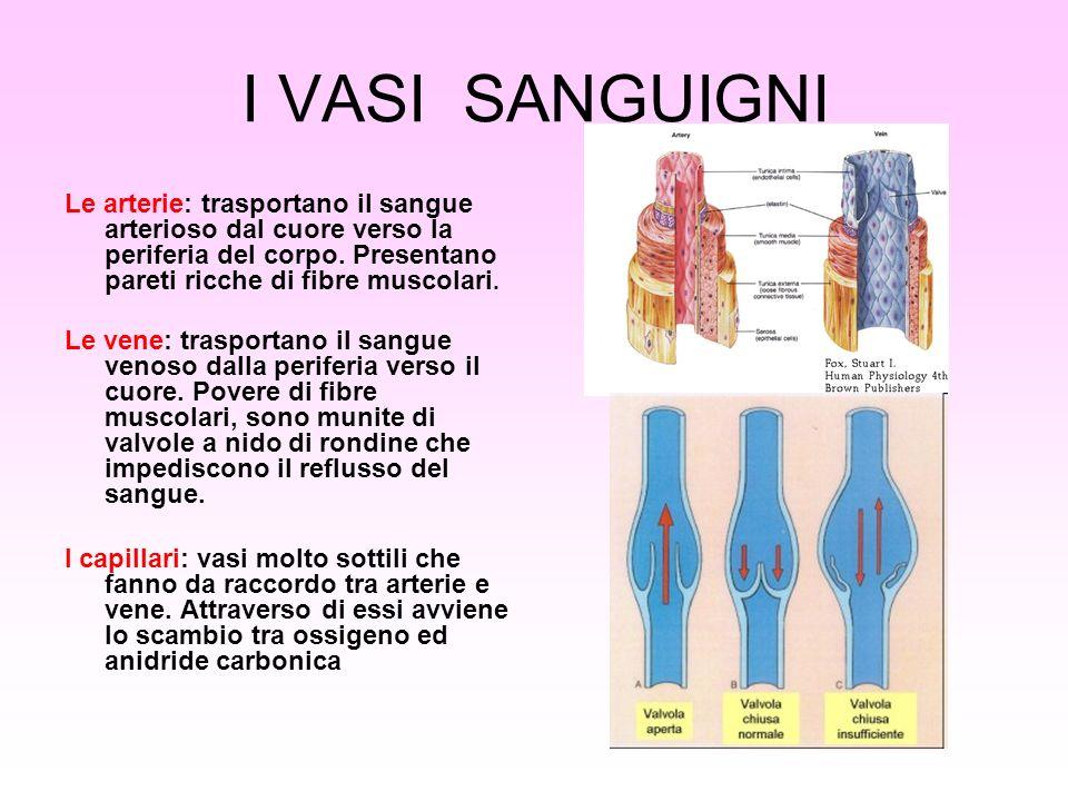 I VASI SANGUIGNI Le arterie: trasportano il sangue arterioso dal cuore verso la periferia del corpo. Presentano pareti ricche di fibre muscolari.