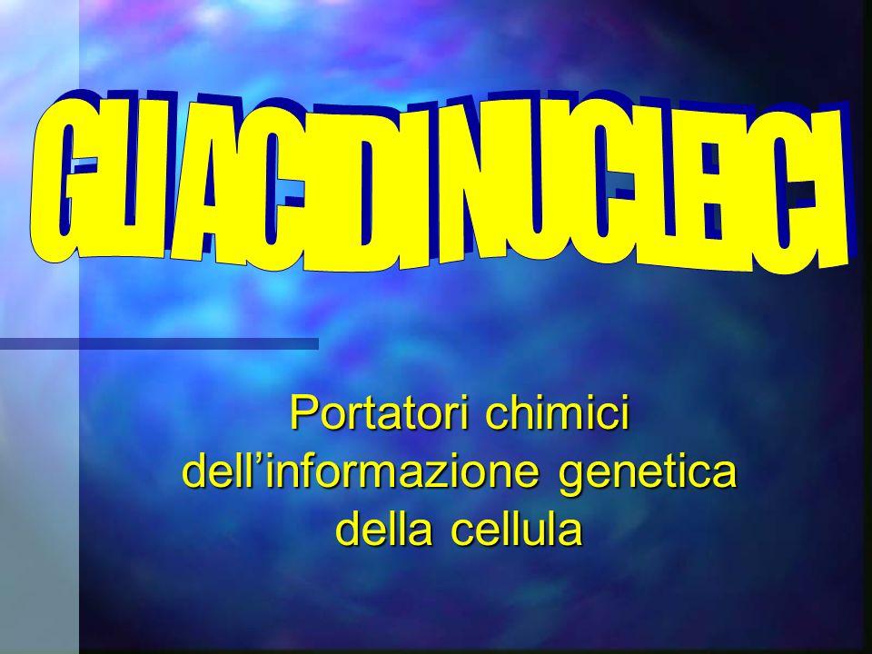 Portatori chimici dell'informazione genetica della cellula