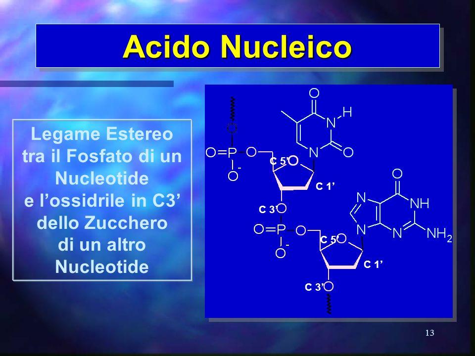Acido Nucleico Legame Estereo tra il Fosfato di un Nucleotide