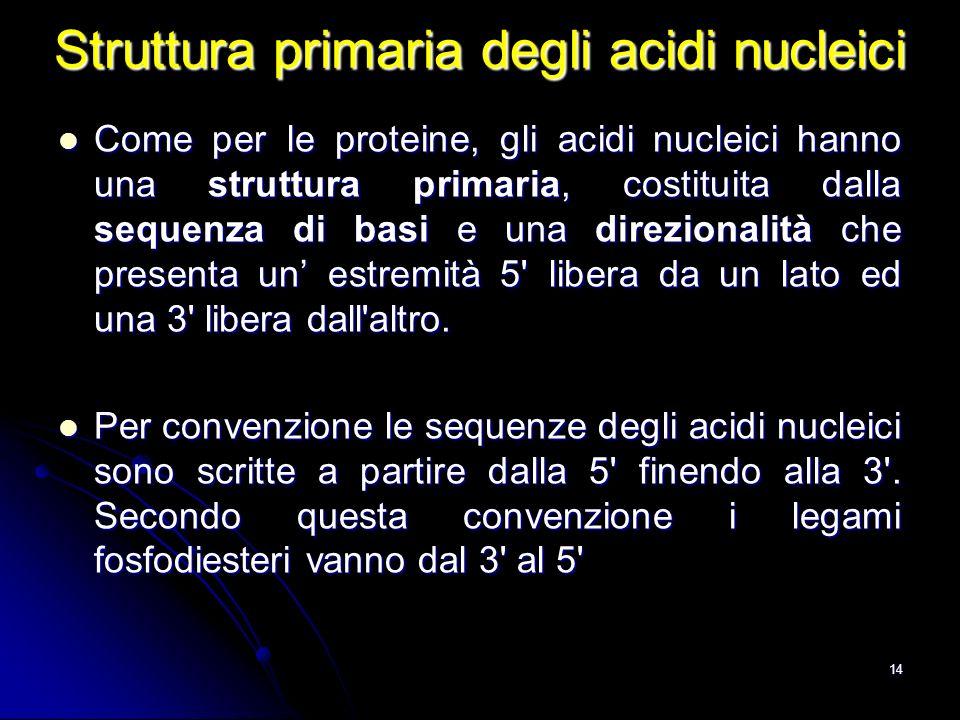 Struttura primaria degli acidi nucleici