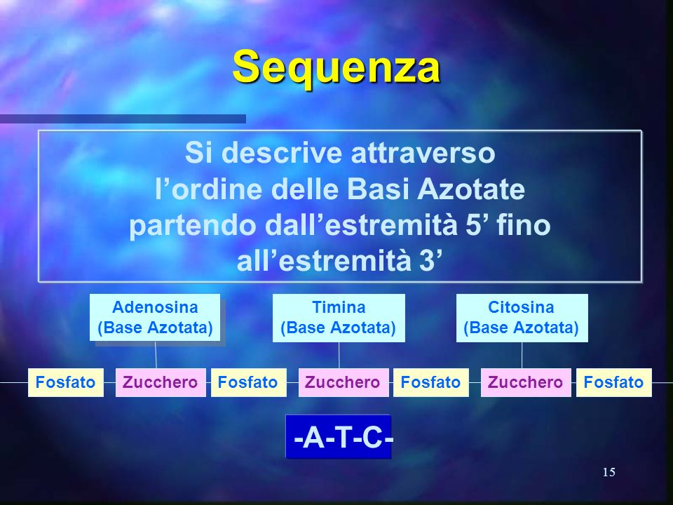 Sequenza Si descrive attraverso l'ordine delle Basi Azotate