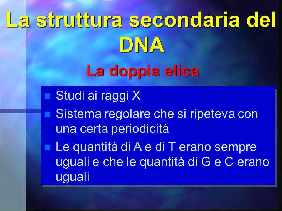La struttura secondaria del DNA