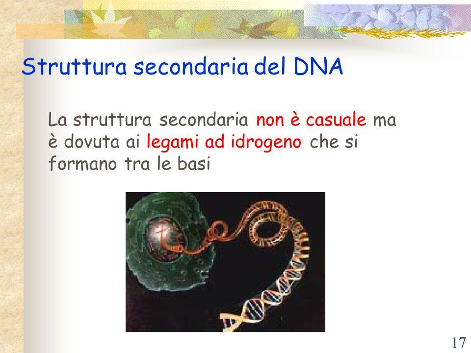 Struttura secondaria del DNA