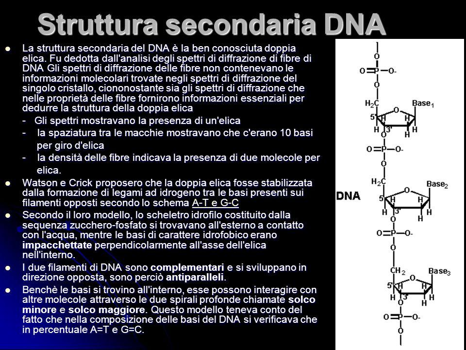 Struttura secondaria DNA
