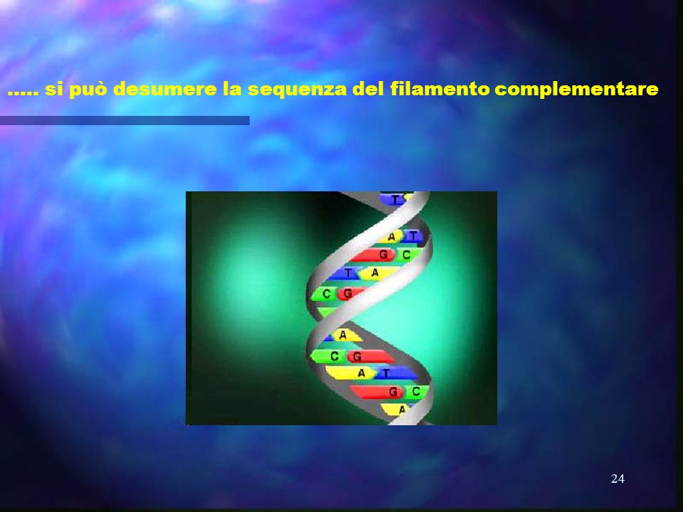 ….. si può desumere la sequenza del filamento complementare