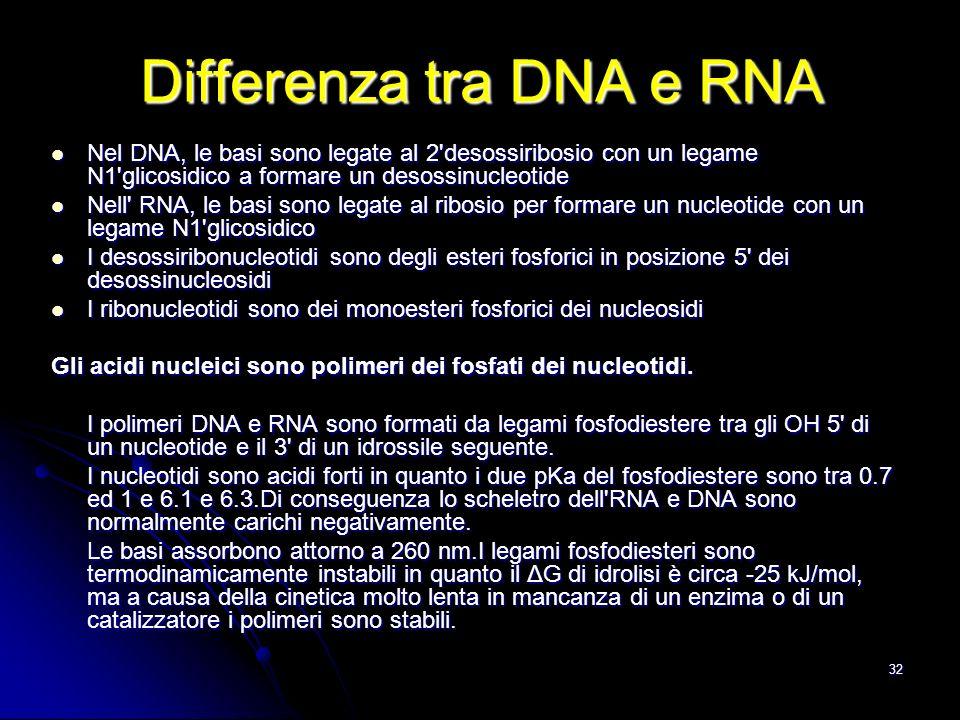 Differenza tra DNA e RNA