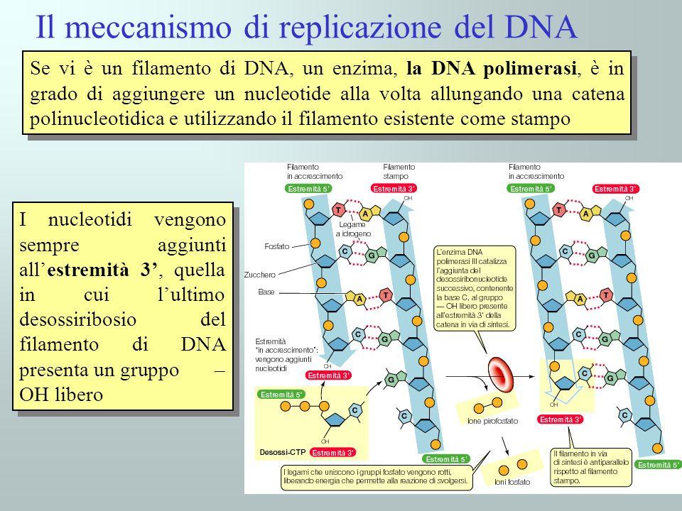 Il meccanismo di replicazione del DNA