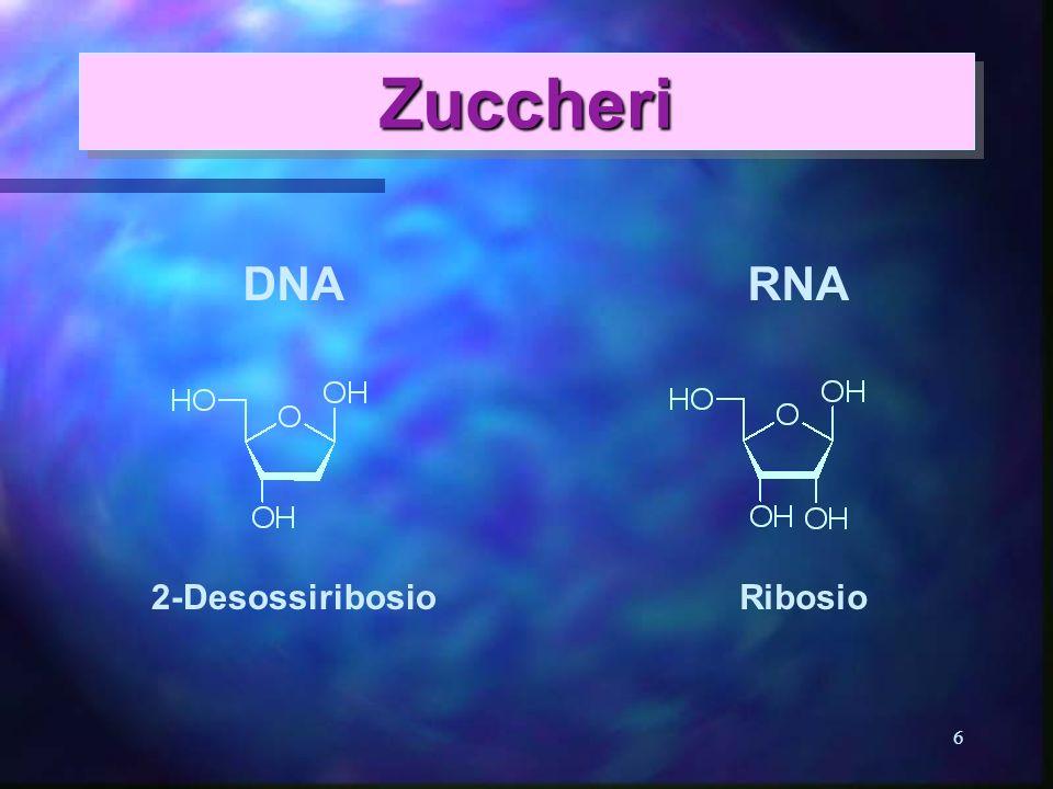 Zuccheri DNA RNA 2-Desossiribosio Ribosio