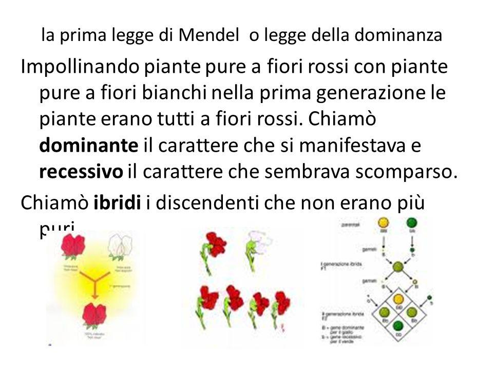 la prima legge di Mendel o legge della dominanza