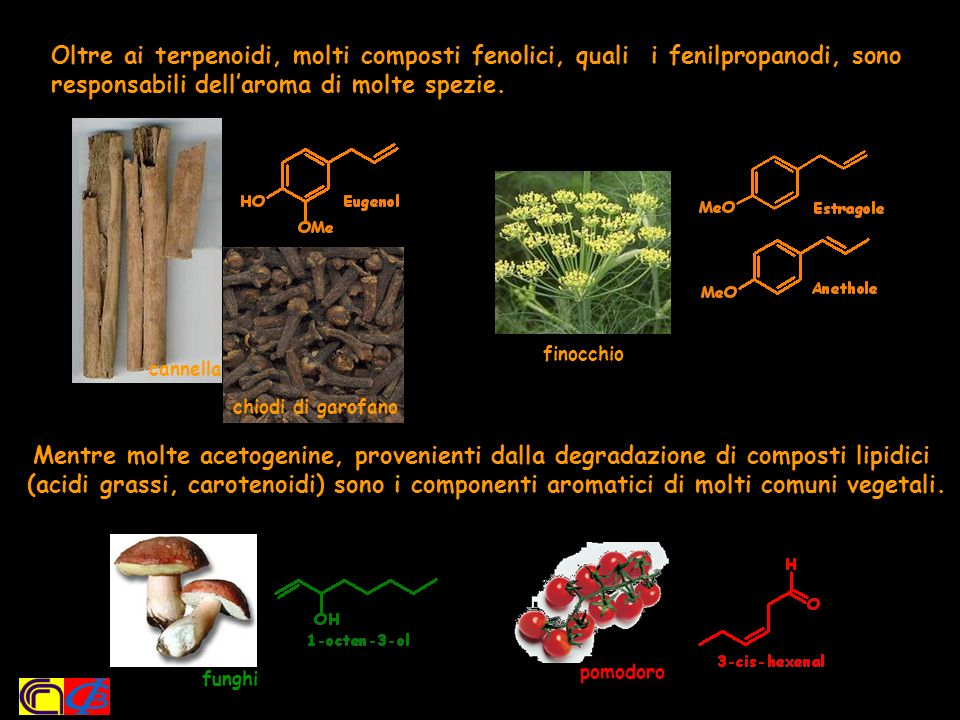 Oltre ai terpenoidi, molti composti fenolici, quali i fenilpropanodi, sono responsabili dell'aroma di molte spezie.