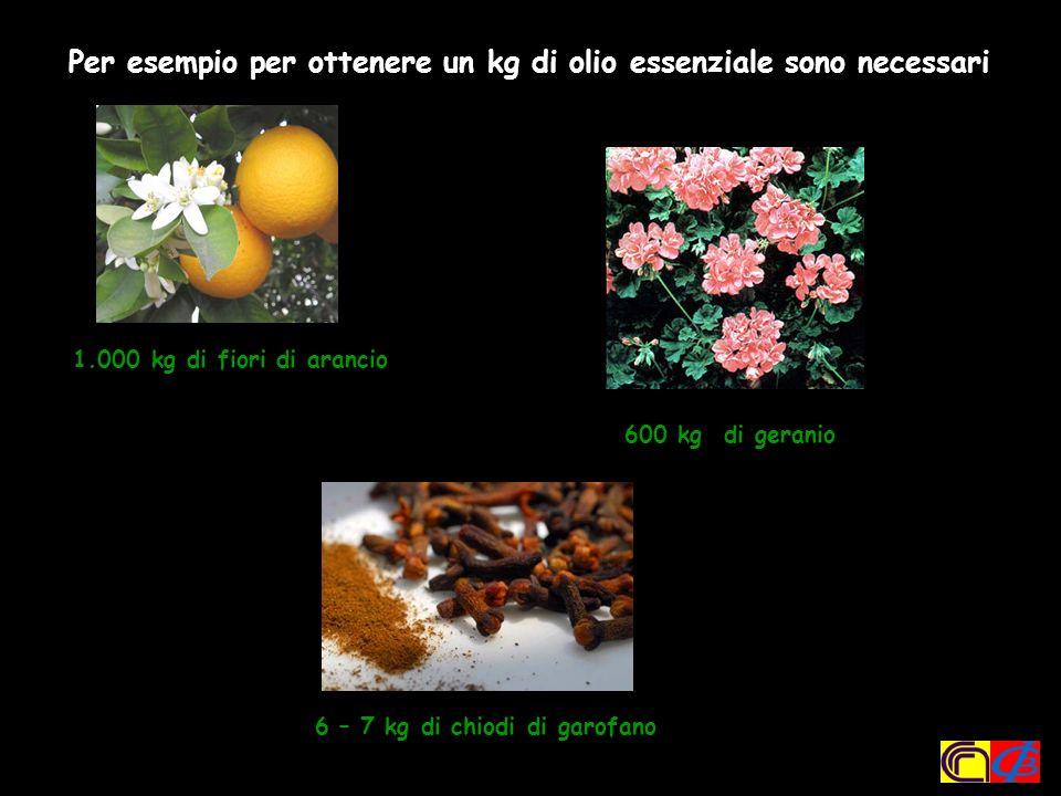 Per esempio per ottenere un kg di olio essenziale sono necessari: