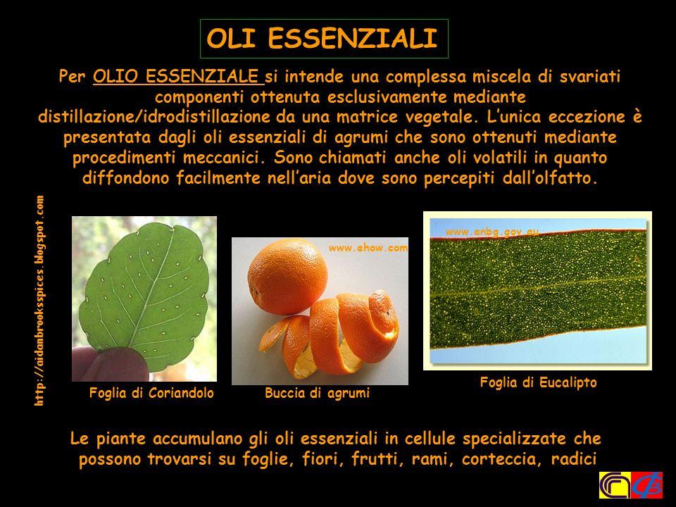 Le piante accumulano gli oli essenziali in cellule specializzate che