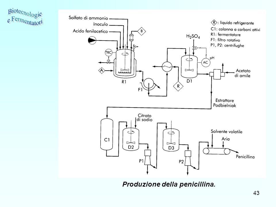 Biotecnologie e Fermentatori Produzione della penicillina.
