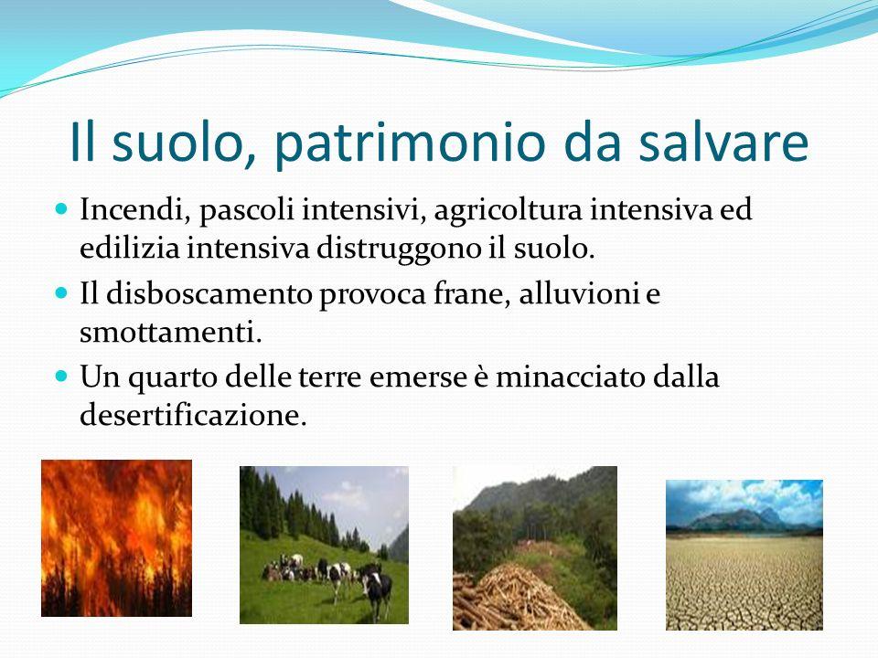 Il suolo, patrimonio da salvare