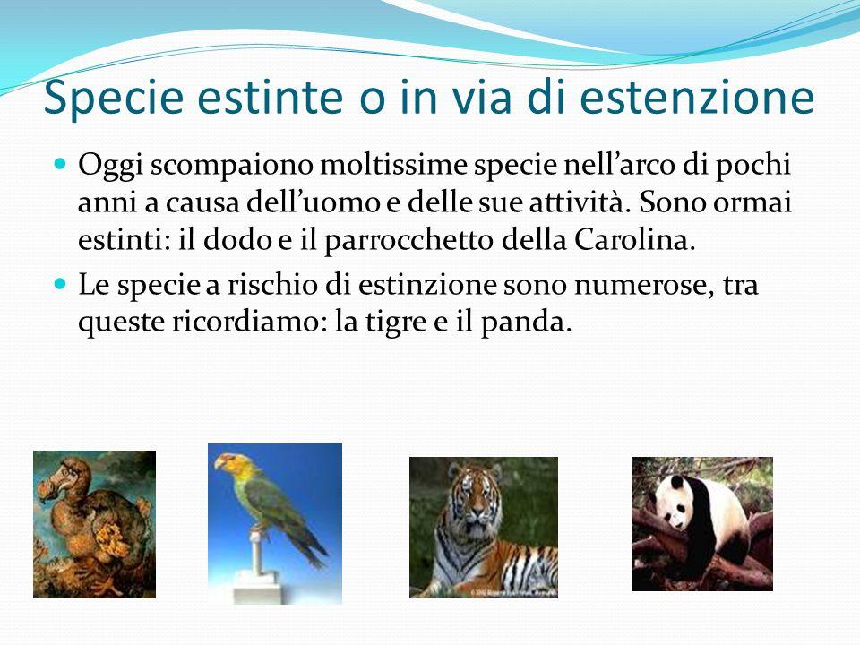 Specie estinte o in via di estenzione