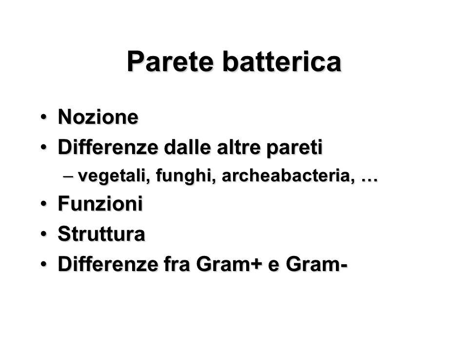 Parete batterica Nozione Differenze dalle altre pareti Funzioni