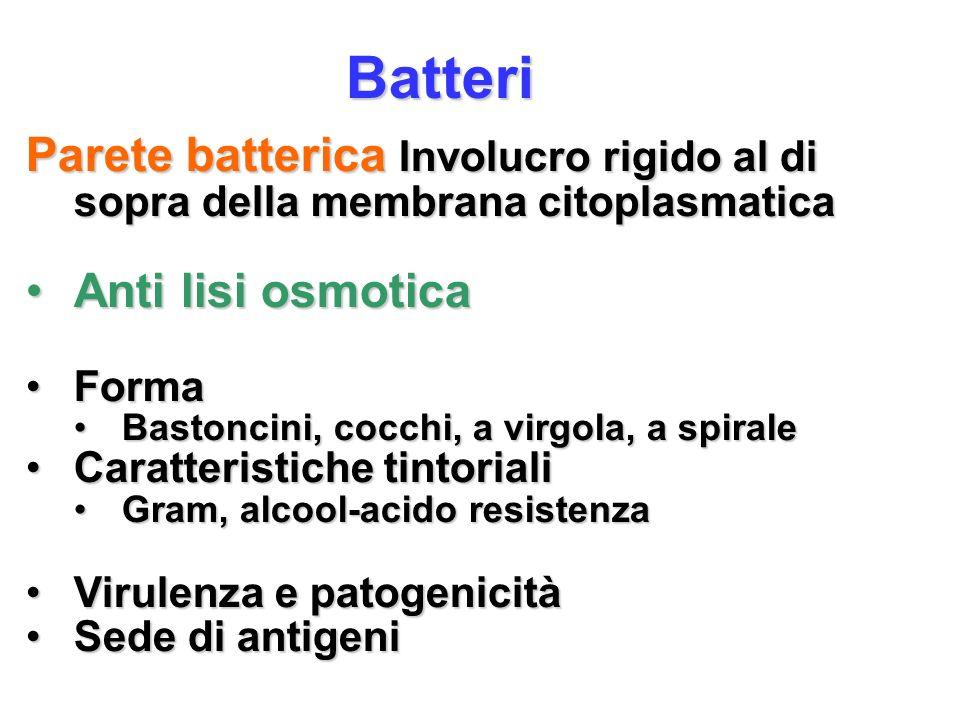 Batteri Parete batterica Involucro rigido al di sopra della membrana citoplasmatica. Anti lisi osmotica.