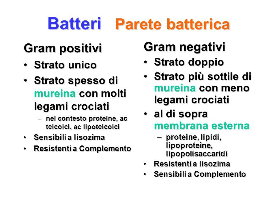 Batteri Parete batterica