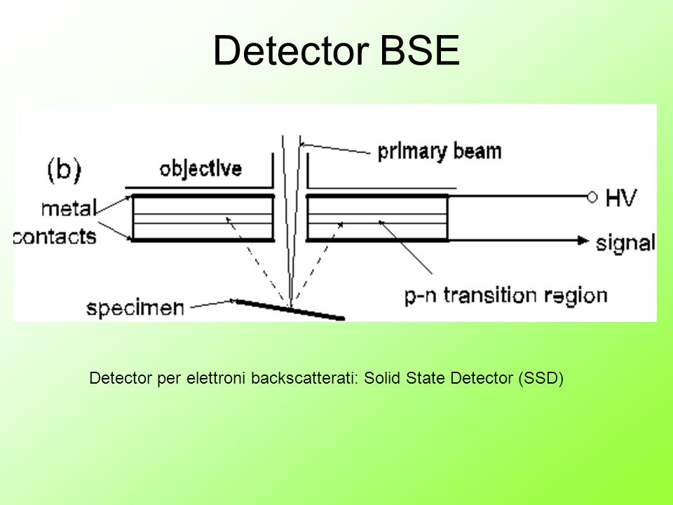 Detector BSE Detector per elettroni backscatterati: Solid State Detector (SSD)