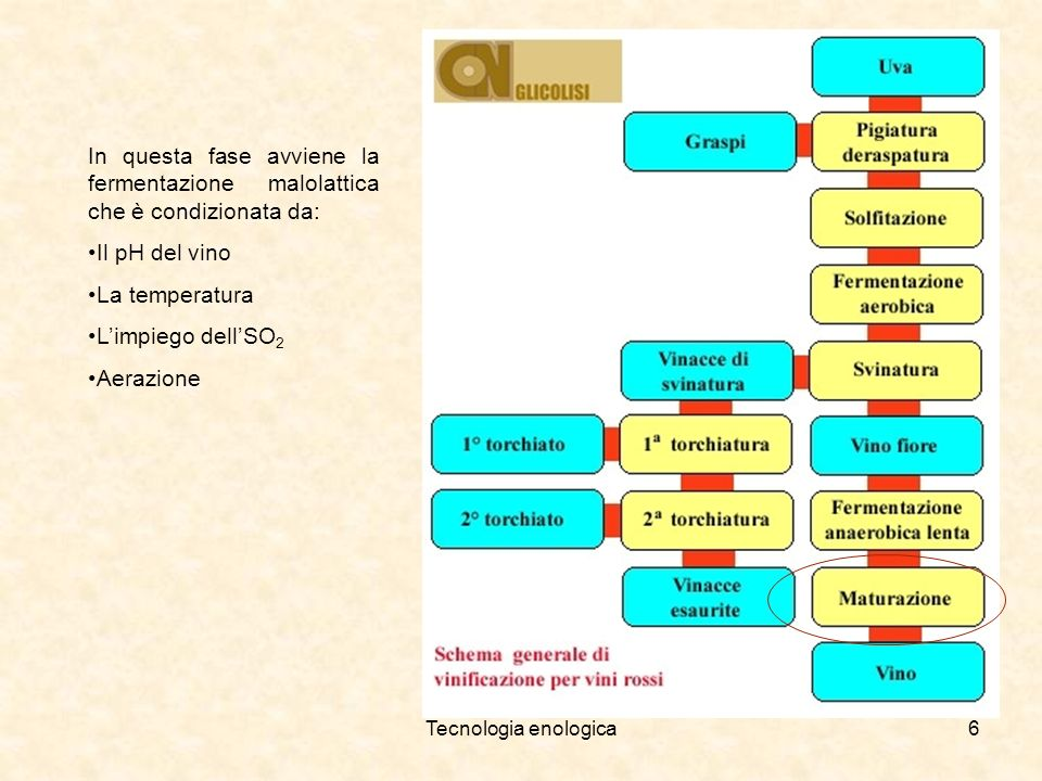 In questa fase avviene la fermentazione malolattica che è condizionata da: