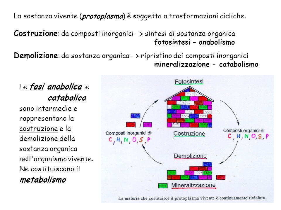 Costruzione: da composti inorganici  sintesi di sostanza organica