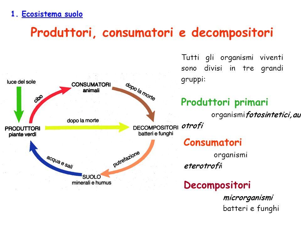Produttori, consumatori e decompositori