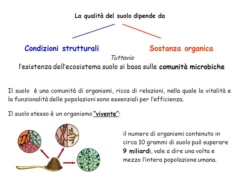 l'esistenza dell'ecosistema suolo si basa sulle comunità microbiche